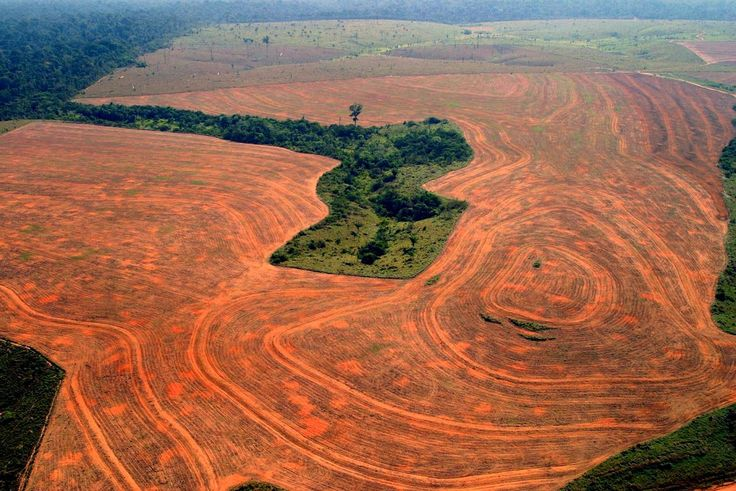 Amazon Rainforest Nearing Its End, All Thanks to Its Reckless ...
